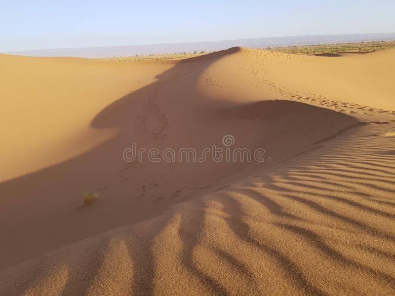 Dyn för Sahara öken arkivfoto