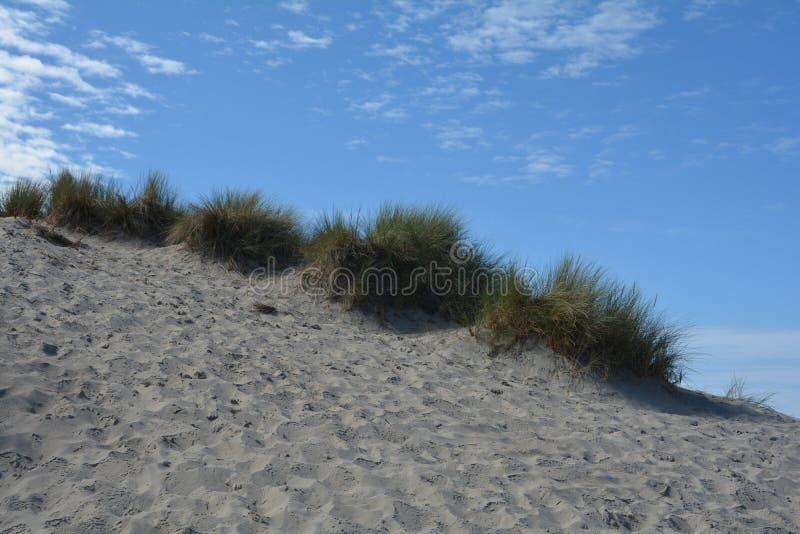 Dyn gräs på Nordsjönstranden fotografering för bildbyråer