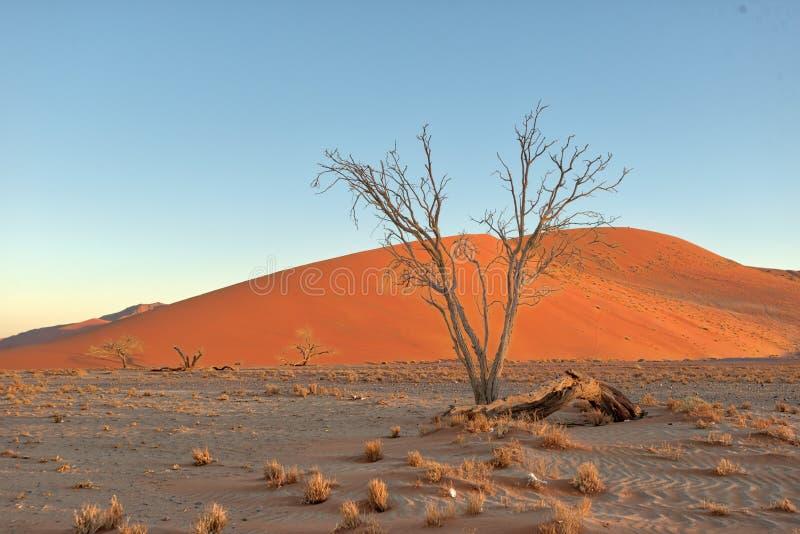 Dyn 45 i sydliga Namibia som tas i Januari 2018 arkivbilder