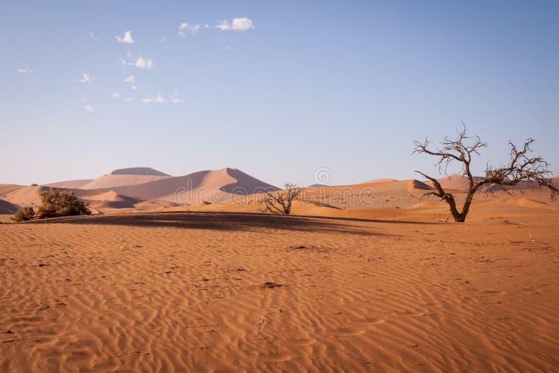Dyn med döda träd i den Namib öknen, Namibia fotografering för bildbyråer