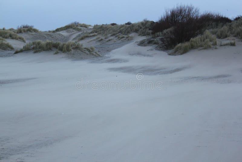 Dyn med gräs på kusten av Nordsjö i Zeeland i Nederländerna royaltyfri bild