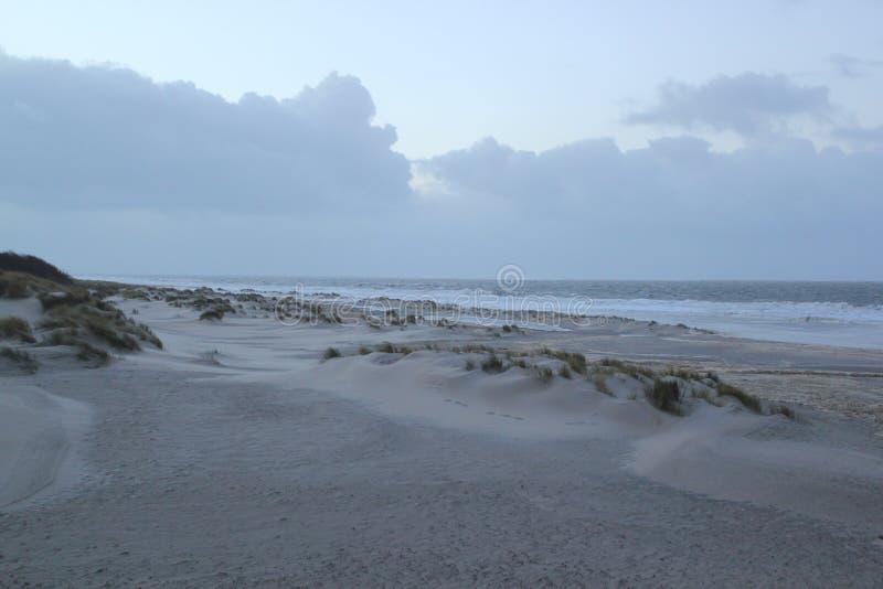 Dyn med gräs på kusten av Nordsjö i Zeeland i Nederländerna arkivfoton