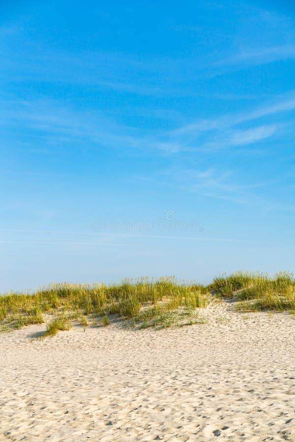 Dyn med strandgr?s fotografering för bildbyråer
