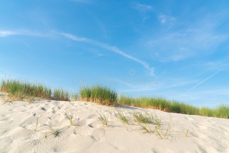 Dyn med strandgr?s arkivfoto