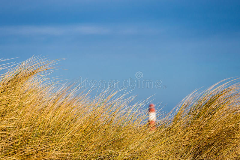 Dyn på Östersjön arkivbild