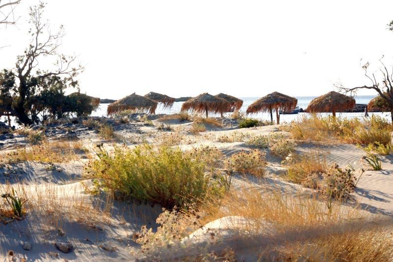 Dyn på stranden fotografering för bildbyråer