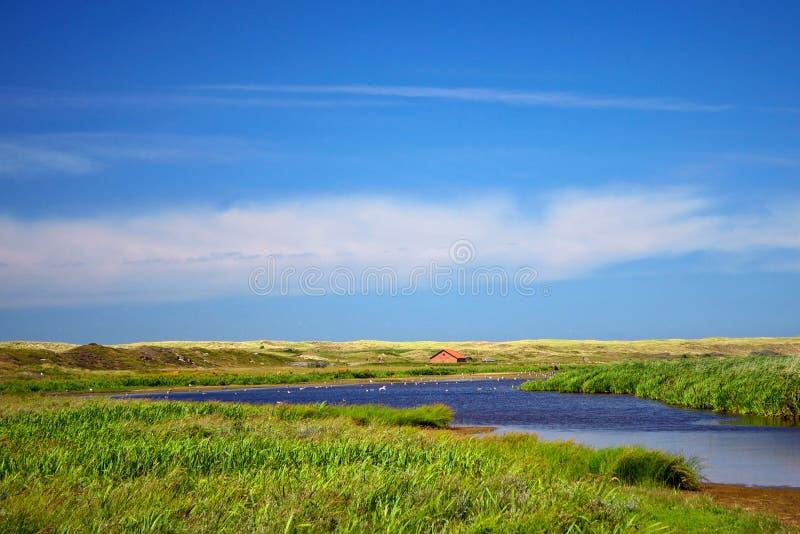 Dyn sjön De Muy på nationalparken i Nederländerna på Texel använde som det bevattna hålet för havsfåglar och höglands- nötkreatur royaltyfri fotografi