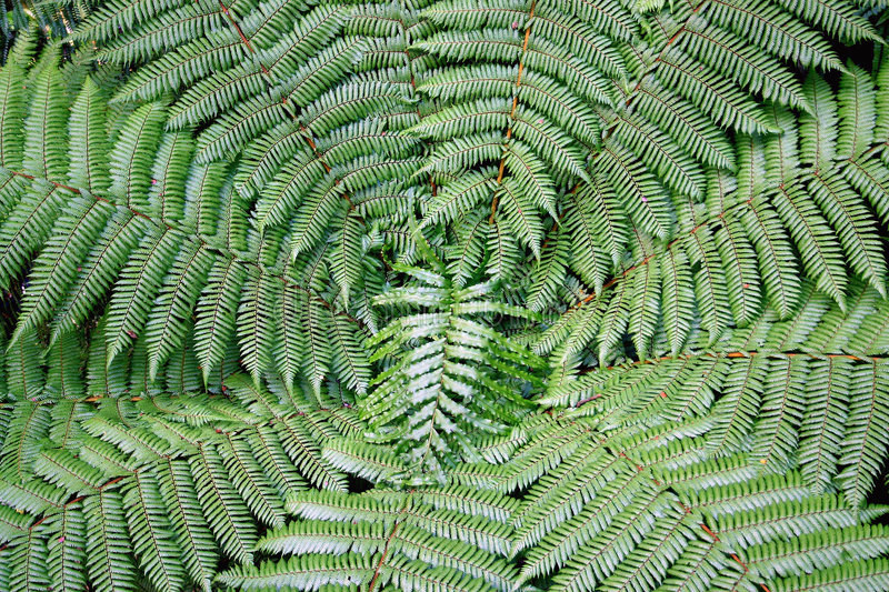 Download Dynamic fern composition stock photo. Image of conservation - 5232208