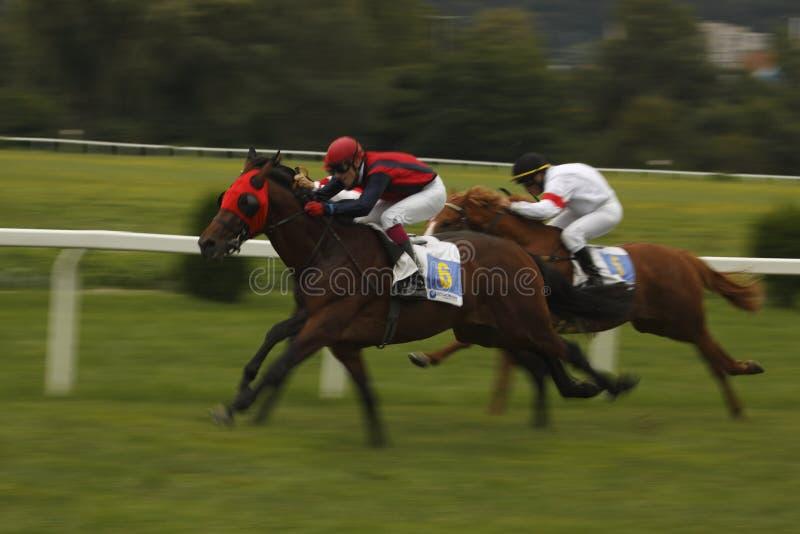 Dynamic st. Leger horse racing