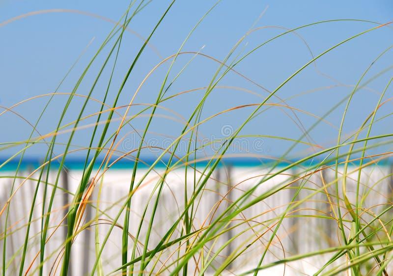 dynen gräs havet fotografering för bildbyråer