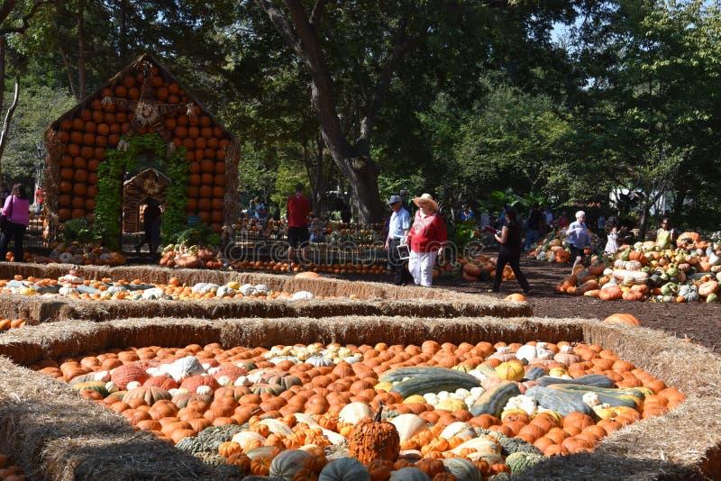 Dyniowa wioska przy Dallas ogródem botanicznym w Teksas i arboretum zdjęcia stock
