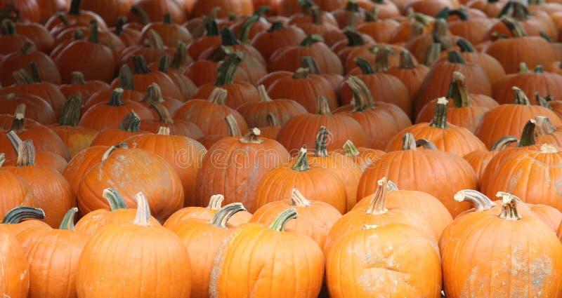Dyniowy Halloweenowy Dziękczynienie obrazy stock