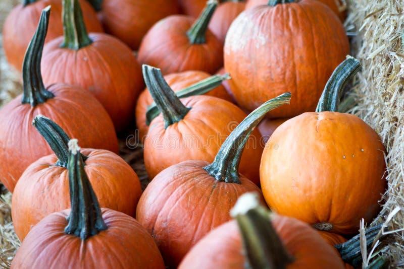 Dyniowy jesień Żniwo obraz stock