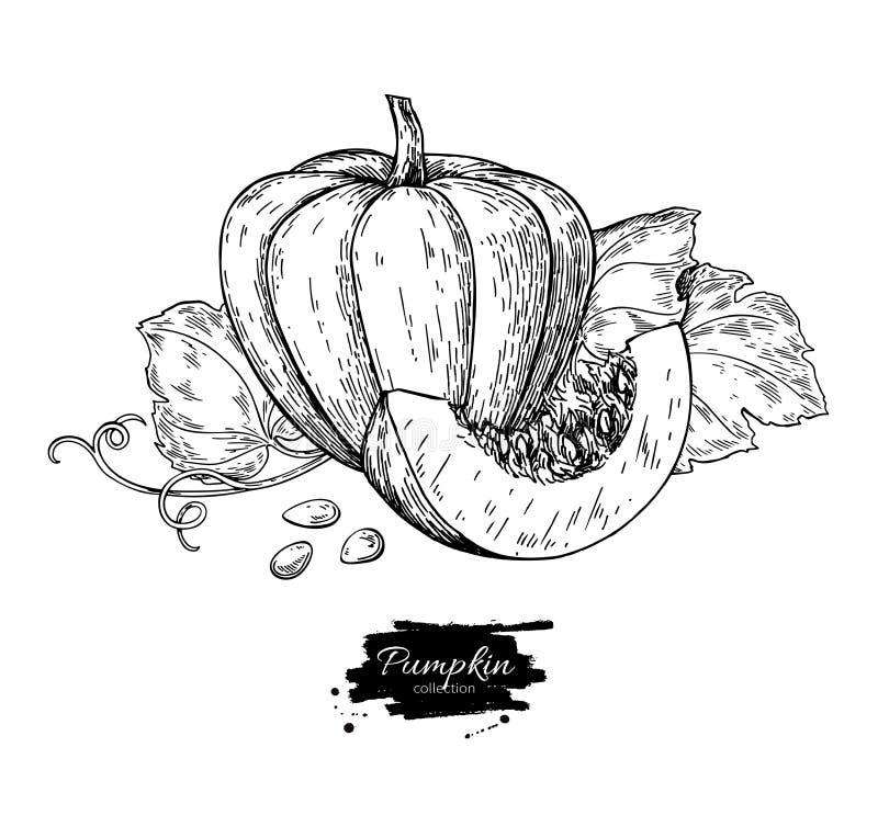 Dyniowy wektorowy rysunku set Odosobniona ręka rysujący przedmiot z slic ilustracja wektor
