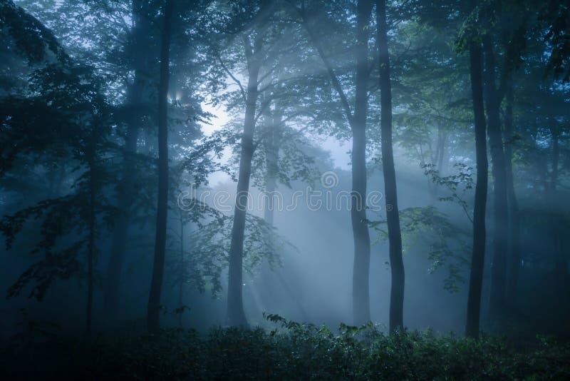 Dyster skog som fylls med dunkelt ljus arkivfoton