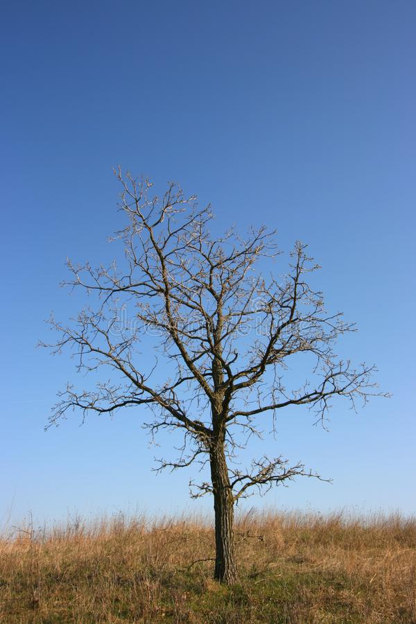 Dyster tree, all bara royaltyfria bilder