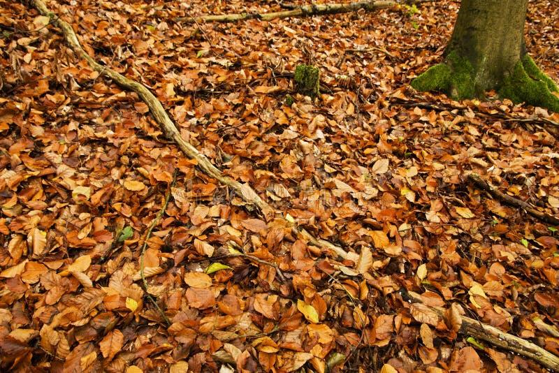 Dywan jesień liść obrazy stock
