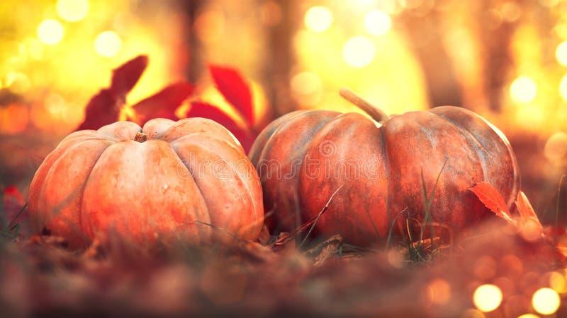 Dziękczynienie Dzień Jesieni żniwa festiwalu pojęcie Spadek scena Pomarańczowe banie nad jaskrawym natury tłem zdjęcia royalty free
