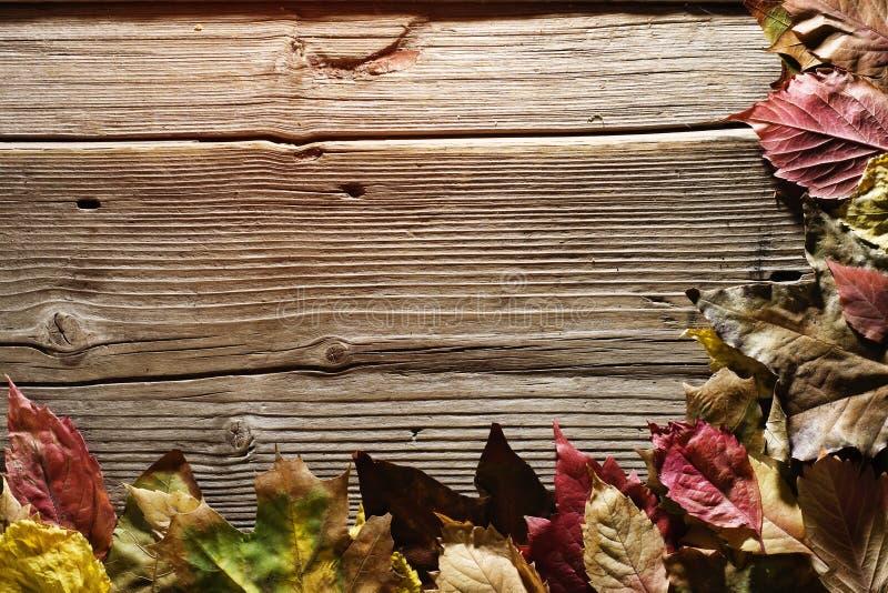 Dziękczynienie, jesień spadek, tło, odgórny widok, kopii przestrzeń zdjęcie stock