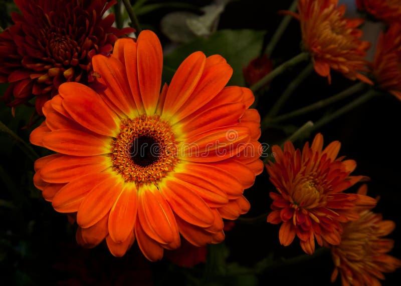 Dziękczynienie kwiaty obraz stock
