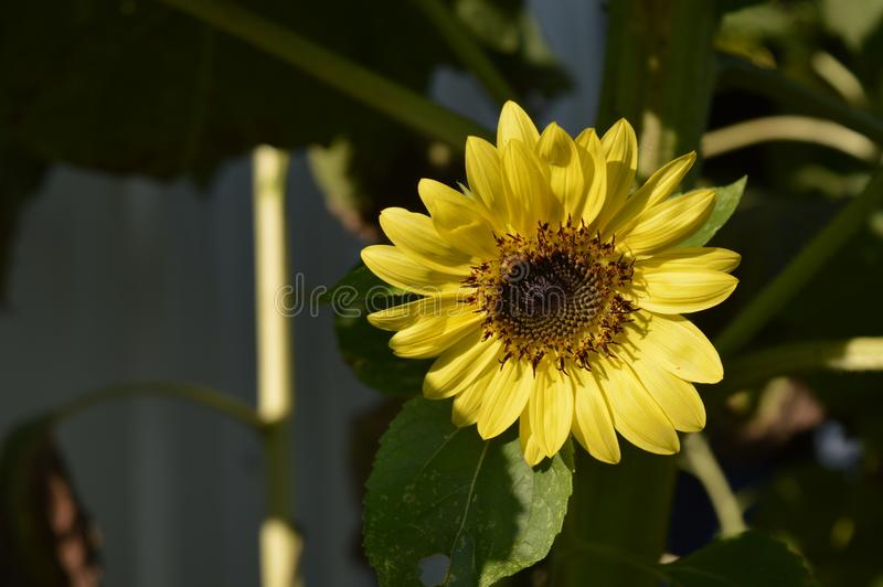 Dziękuje słońce dla miłości zdjęcie royalty free