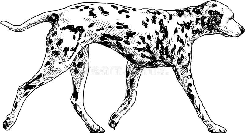 Działający dalmatian royalty ilustracja