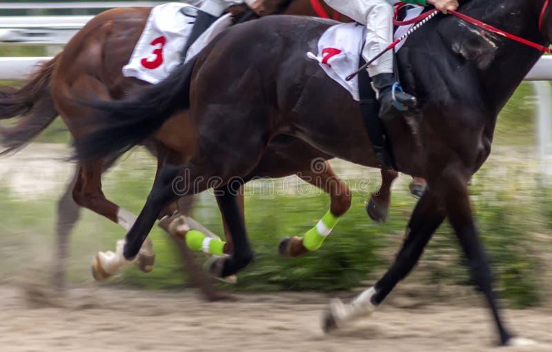Działających koni zamknięty up fotografia royalty free