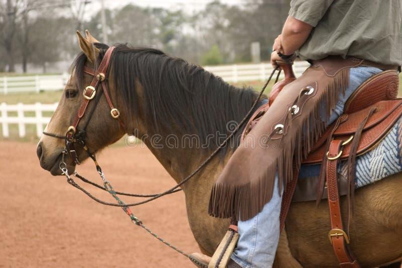 działanie koń. fotografia royalty free