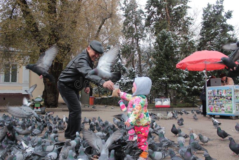 Dziad i wnuczka karmi ptaki w Almaty w Kazachstan zdjęcie stock
