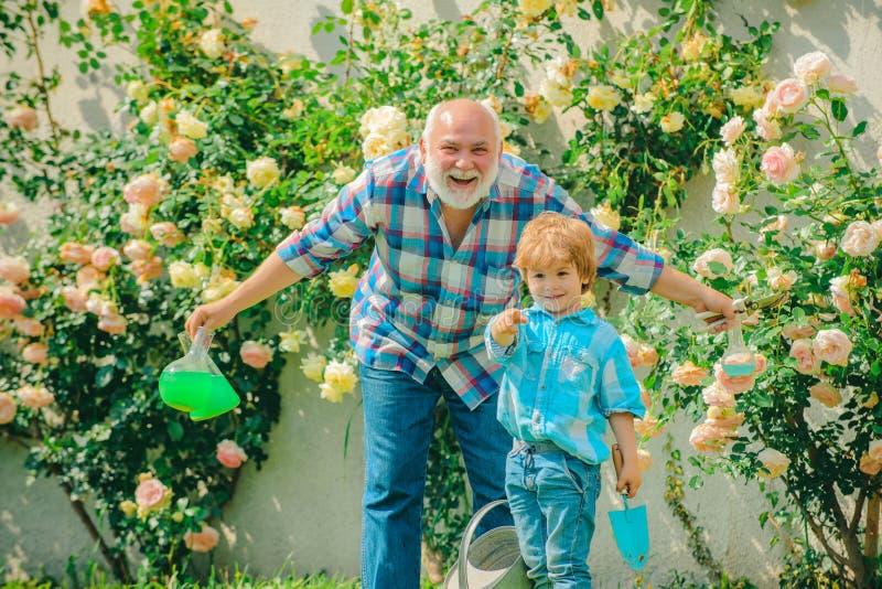 Dziad i wnuk cieszy się w ogródzie z różami kwitniemy Dziad opowiada wnuk Wiosna i lato zdjęcia stock