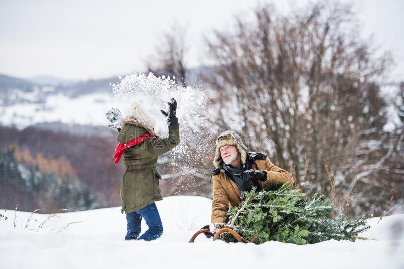 Dziadek i mała dziewczyna dostaje choinki w lesie, mieć zabawę obrazy royalty free