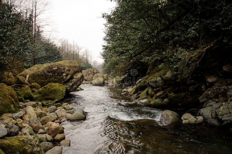 Dzicy halni rzeka przepływy otaczający mech zakrywającym kołysają obrazy stock