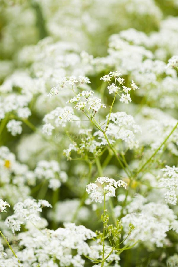 Dzicy Kwiaty Obraz Stock