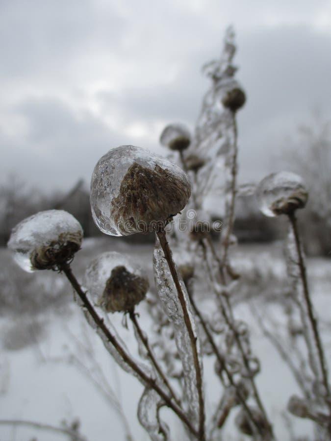 Dzicy kwiaty i trawa pod lodem fotografia stock