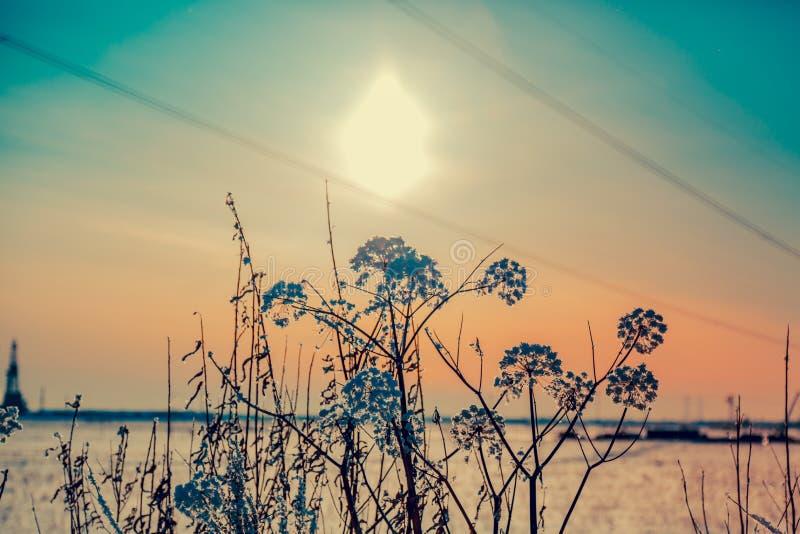 Dzicy kwiaty marznący obraz stock