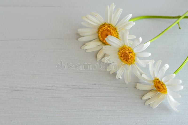 Dzicy kwiaty na drewnianym tle z kopii przestrzenią zdjęcia royalty free