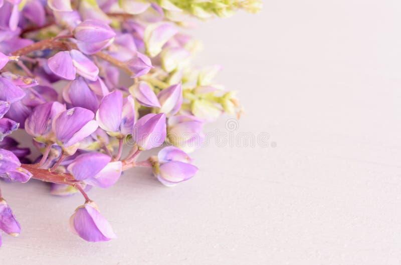 Dzicy kwiaty na drewnianym tle z kopii przestrzenią fotografia stock