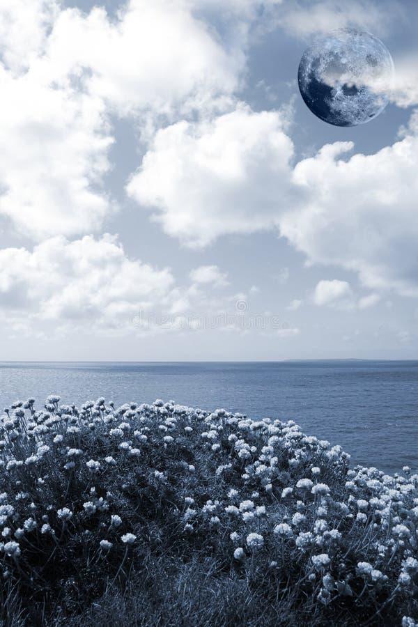 Dzicy kwiaty na falezie ostrzą z księżyc w pełni obraz stock