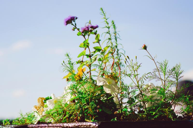 Dzicy kwiaty przeciw niebieskiemu niebu, w górę fotografia royalty free