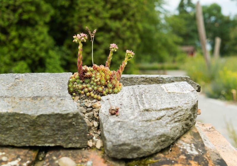 Dzicy kwiaty r na dachach domy zdjęcia royalty free