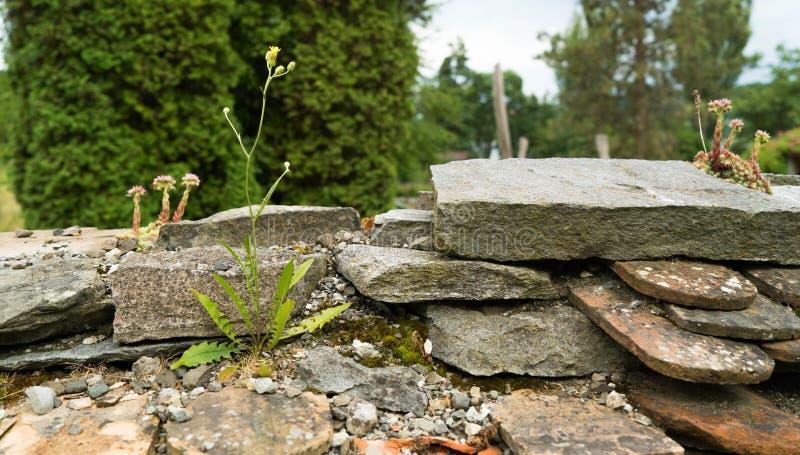Dzicy kwiaty r na dachach domy obrazy royalty free