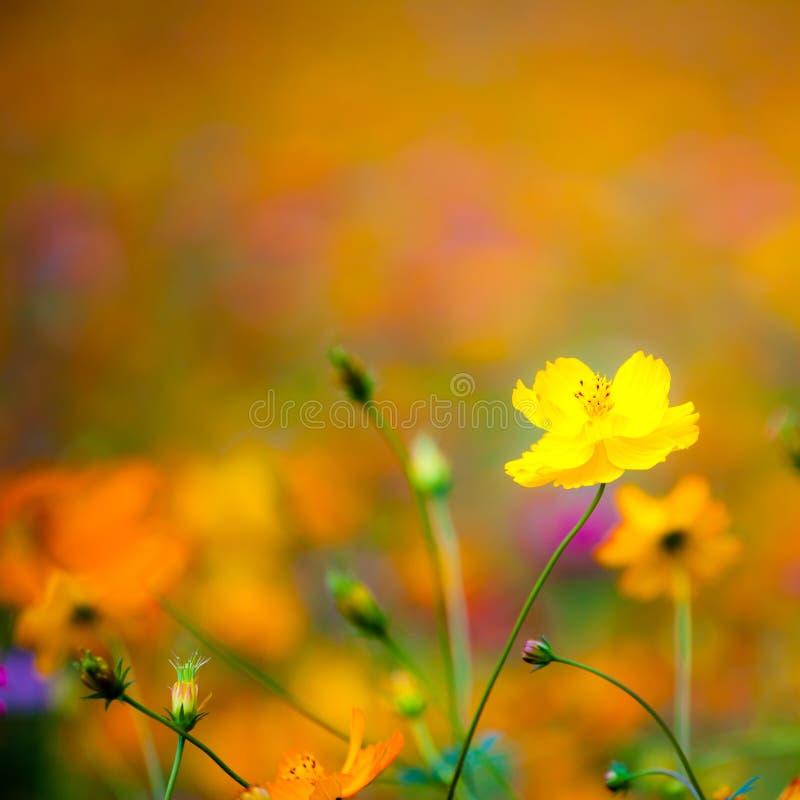 Dzicy kwiaty w Yangshuo Chiny obrazy stock