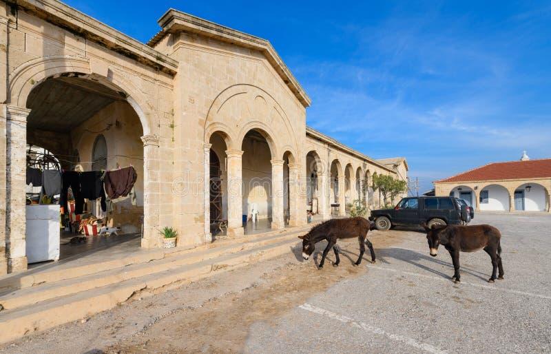 Dzicy osły przy Apostolos Andreas monasterem na Karpass półwysepie w tureckim obsiadłym terenie północny Cypr 4 zdjęcia royalty free