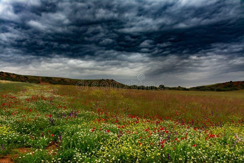 Dzicy pola z kwiatami i chmurami zdjęcia royalty free