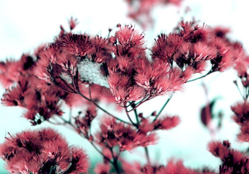 Dzicy puszy?ci kwiaty i trzony sucha nie?ywa trawa pod s?o?ce formy dynamicznym sk?adem na ?niegu ilustracji