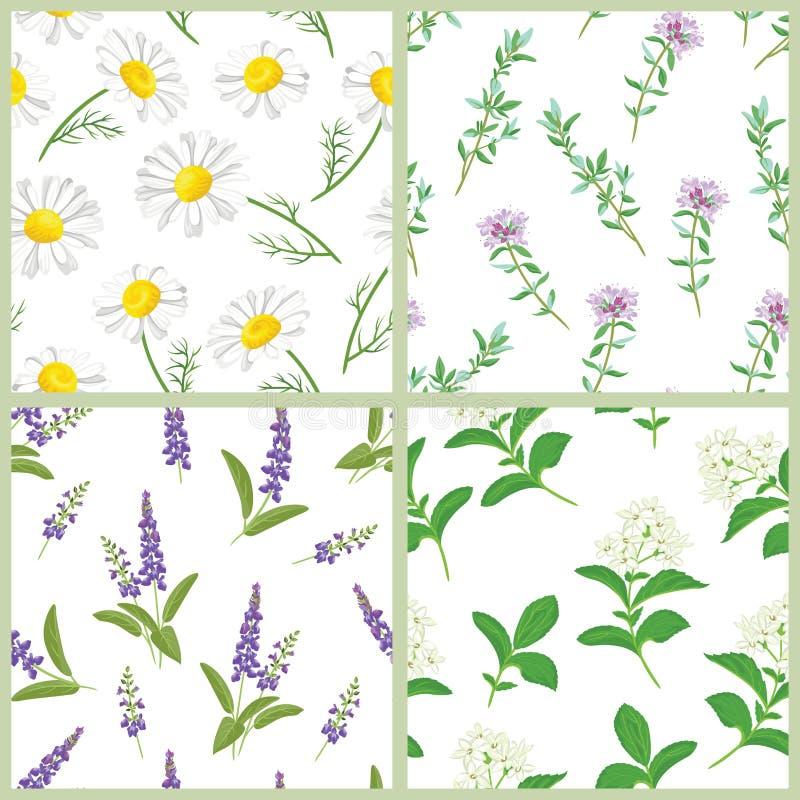 Dzicy ziele i kwiaty ustawiają bezszwowi wzory Wektorowa ilustracja medyczny chamomile, mędrzec, macierzanka i stevia, ilustracja wektor