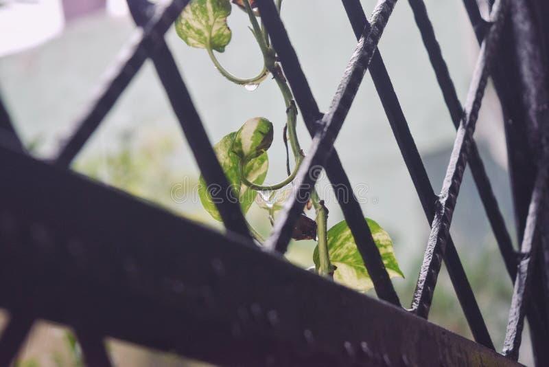 dzień deszcz fotografia stock