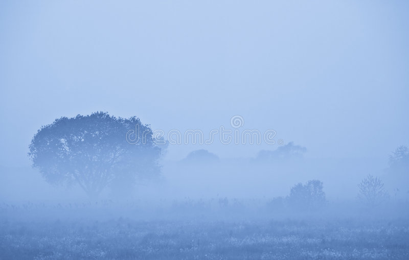 dzień dobry mgła. obrazy royalty free