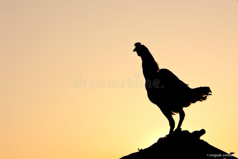 Dzień dobry z kurczakiem obrazy royalty free