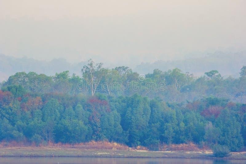 Dzień dobry z lasem w jaskrawej wiośnie zdjęcie royalty free